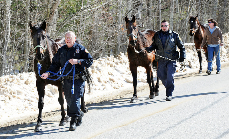 Mechanic Falls police officer Alan Carr, left, Androscoggin County Deputy Jon Guay, center and Elva Harrison of Poland walk down Elm Street in Mechanic Falls after corraling these three horses near the intersection of Poland Corner Road over a mile away.  While three of the six wayward hung around the farm, these three took off for a run down the road.