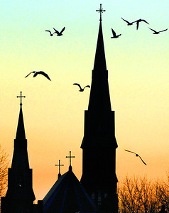 A flock of seagulls take flight from Drouin Field in Lewiston at sunset Friday afternoon with the spires of St. Patricks Church in the background