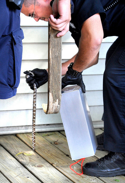 LPD officer Raymond Vega, right,  pulls a python from the cracks of a porch on Pine Street in Lewiston after it tried to escape when he and fellow officer Ryan Guay, left, used a piece of wood to try coaxing a pyton into a shoe box.  After thwarting the attempted escape, the toughest part was trying to find a place to drop it off as the SPCA did not want to take it since the lost pet was not injured.