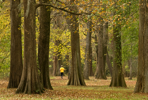 A man in yellow jogs through the fall folliage at Greensprings Park Sunday afternoon.