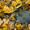 Water trickles through fallen leaves in a small stream running through Greensprings Park Sunday afternoon.