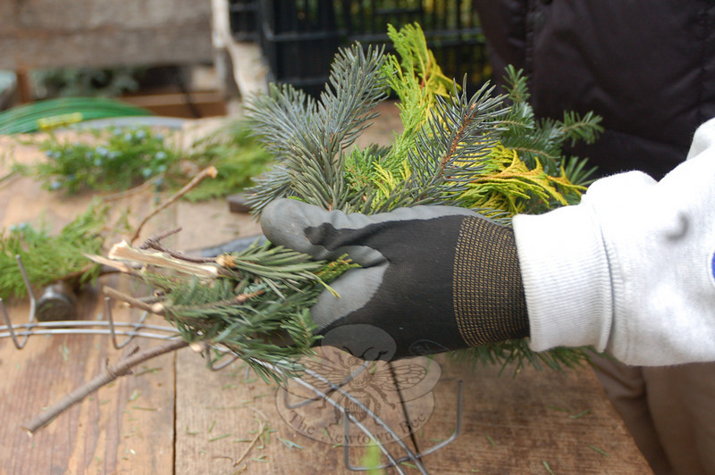 Knowing what greens to combine is part of the fun and skill of making a wreath from scratch, and thick gloves protect the hands from sharp needles.  (Crevier photo)