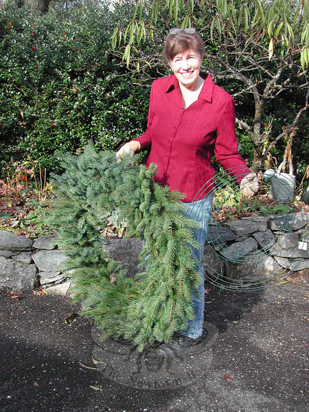 Patty Graves has been making her own wreaths for many years. Taking advantage of a recent pleasant day, she crafted this large wreath for her garage. The wreath will be laid gently outdoors in her garden until it is time to hang it, in order to keep it fresh.  (Crevier photo)