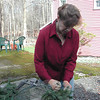 Cable ties are a quick and reliable method of fastening greens to the wire ring when making wreaths, Patty Graves has discovered, rather than hand-wiring each bunch.  (Crevier photo)