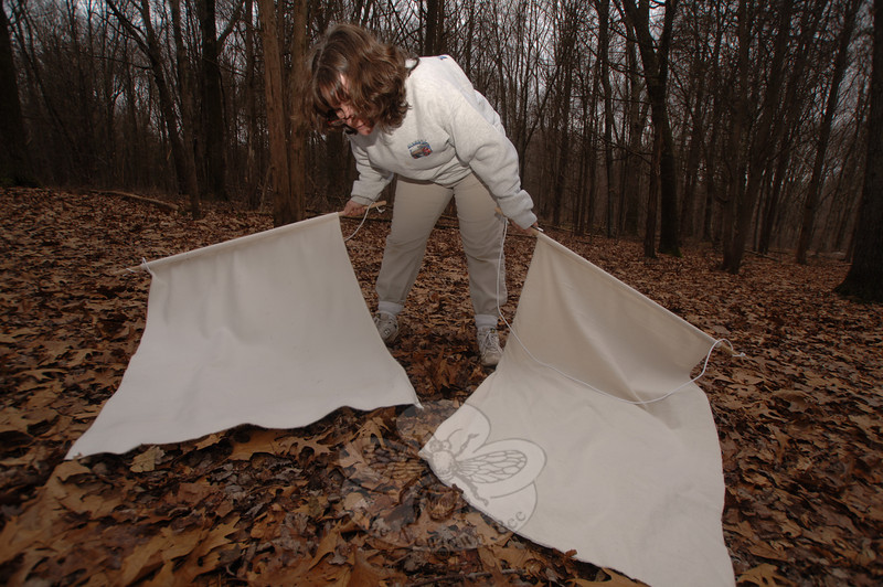 With felt sheets in both hands, Donna Culbert aimed to catch and sample ticks snared in the Orchard Hill Nature Center on Huntingtown Road. The Health District Director was collecting specimens that will be tested for Lyme and other transmittable diseases in the coming weeks, along with ticks from several other Fairfield County communities.  (Bobowick photo)