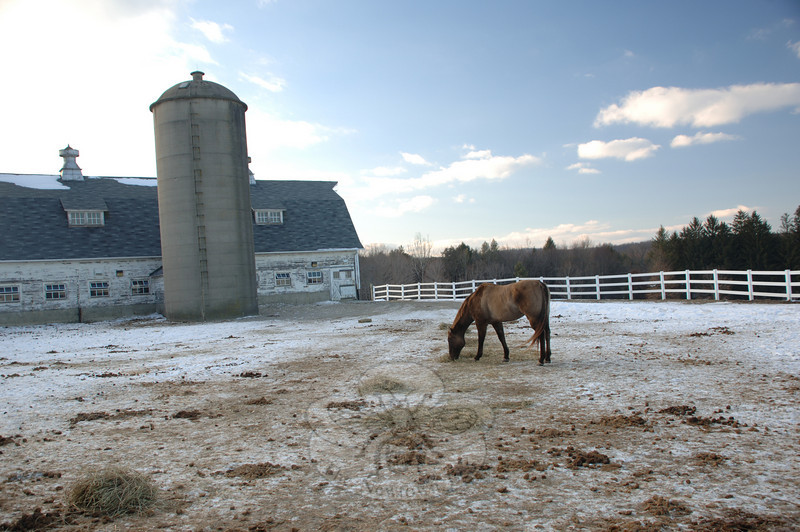 The Second Company Governor's Horse Guard is still in jeopardy from proposed state budget cuts as the state grapples with its deficit.  (Bobowick photo)