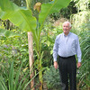 George Miller is proud of the five-year-old banana tree that grows in his Main Street garden. This year, the plant is producing bananas for the first time. The tiny bunch of bananas can be seen growing between the two large leaves in this photo.  (Crevier photo)