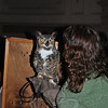 Car vs owl injuries are not unusual, says Mary-Beth Kaeser, holding Oscar the great horned owl. Owls pursuing prey over roads can be hit by traffic. Oscar permanently damaged one wing in such an accident, and cannot be returned to the wild. It is vital that people be conscientious about their impact on the environment in order to protect raptors, such as the owls, and other wildlife, says Ms Kaeser.  (Crevier photo)