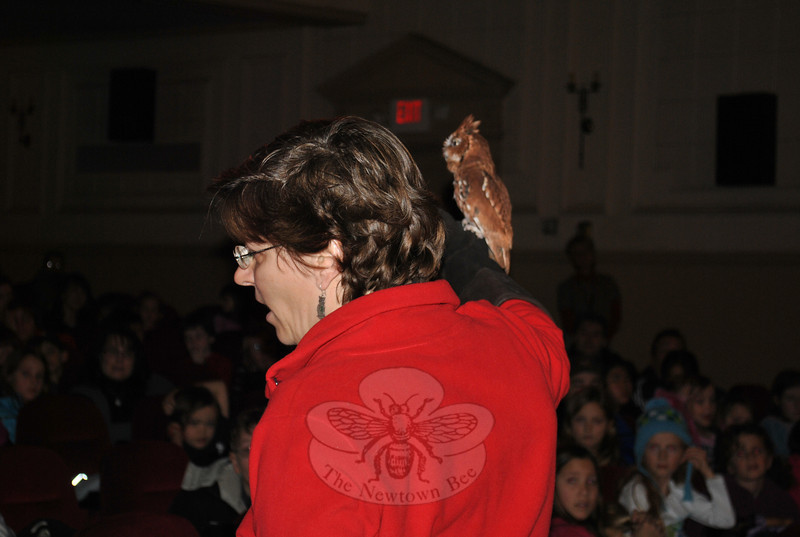Cedar, an Eastern screech owl, sits on the shoulder of Horizon Wings handler Jeanne Wadsworth during a special program at Edmond Town Hall Theatre on Wednesday, December 29. Cedar lives at the Ashford raptor rehabilitation center due to an injury that makes it impossible for him to survive on his own.  (Crevier photo)