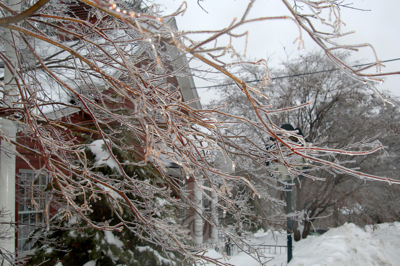 A light rain gathered on bare tree branches, coating them with a layer of ice that caught the light.  (Bobowick photo)