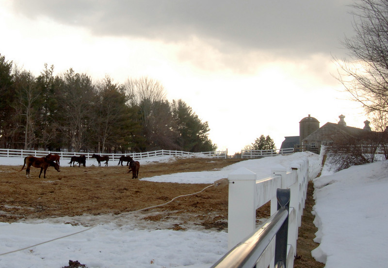 Grazing lazily across a fenced-in field Wednesday were the Second Company Governor's Horse Guard horses. Behind them to the right is the large barn and agricultural building on the Wildlife Drive site off Trades Lane.  (Bobowick photo)