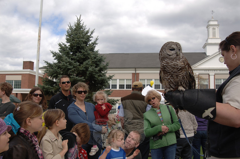 Sophia the barn owl, who makes her home at Audubon Sharon, turns her head away from the crowd during the Earth Day Festival at Newtown Middle School on April 30.  (Bobowick photo)