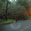Hook & Ladder Firefighter David White directed traffic on Parmalee Hill Road after a fallen tree blocked entry to the aptly named Windy Woods Circle following a brief yet intense storm on June 9.  (Gorosko photo)