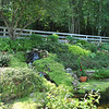 "Diana and Wayland Johnson awaken each morning to the bedroom view of a garden that includes a waterfall, fish pond, and a succession of color from shrubs, ground cover, and flowering plants.  (Crevier photo)<br /> <br /> PLEASE NOTE additional photos from Diana & Wayland Johnson's garden were included in a slideshow. All of those photos can be found here: <a href=""http://photos.newtownbee.com/Nature/Glimpse-of-the-Garden-Diana/18383745_qPhm93#1416948723_92KgJsj"">http://photos.newtownbee.com/Nature/Glimpse-of-the-Garden-Diana/18383745_qPhm93#1416948723_92KgJsj</a>"