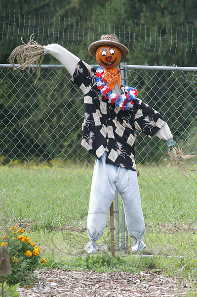 A smiling scarecrow is posted inside the perimeter of extra-tall fencing that surrounds the Victory Garden. (Gorosko photo)