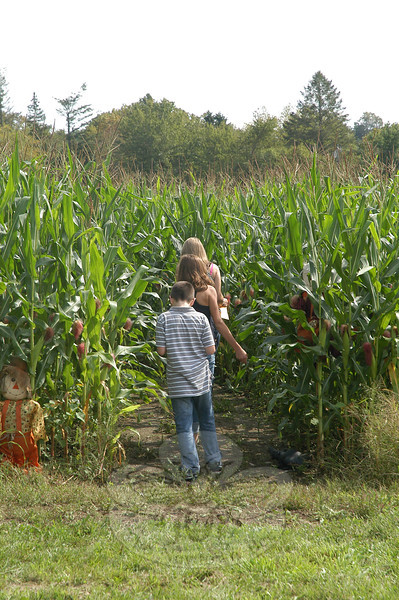 Some children make their way into an elaborate corn maze. (Gorosko photo)