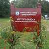 Flowering vegetation grows up a handsome sign that notes the location of the town's Victory Garden at Fairfield Hills.  (Gorosko photo)