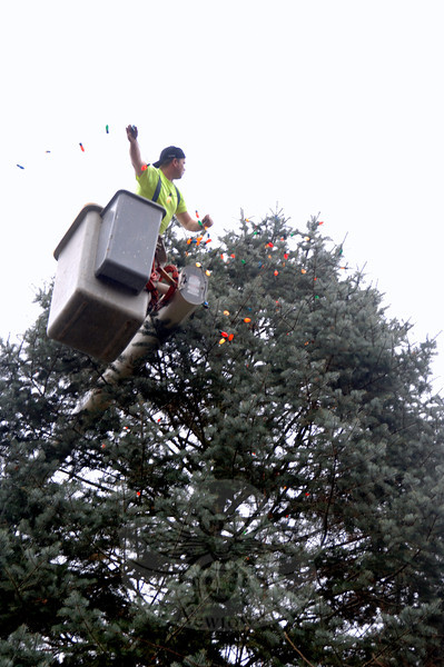 With a strand of lights in hand, Keven Belden swings the bulbs toward the tree.  (Bobowick photo)
