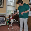 Performing tricks is an encouraged portion of therapy pet training. Sitting up and begging for his owner, Nina Seturins, is 4-year-old beagle Brady. Brady, a Therapy Dog International graduate, visits Maplewood at Newtown, Bethel Health Care, and the School for International Studies in Danbury.  (Crevier photo)