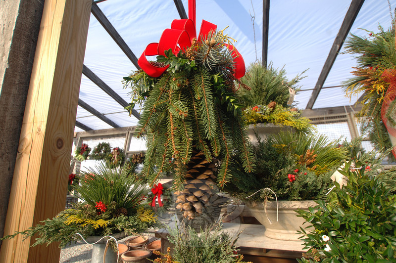 "In addition to the center pinecone, this hanging greens arrangement includes blue spruce, boxwood, cypress, and cryptomeria, and represents ""the perfect example of what you can find in your yard,"" said Anthony Reelik, director of landscape operations at Shakespeare's Garden.  (Bobowick photo)"