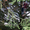 Sharon Doherty takes a photo of her sons, Joseph (left) and Patrick, in the tree that was selected to be the Christmas tree for the Danbury Stew Leonard's store this holiday season. The tree was cut down on November 17.  (Hicks photo)