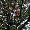 Joseph and Patrick Doherty took one final climb on Wednesday morning of the Norway spruce that has been selected to become the Christmas tree at Stew Leonard's this holiday season. Dan Doherty, their father, had offered the tree to the store, and tree wrangler Mike Reseska decided it was perfect the moment he spotted it on October 31.  (Hicks photo)