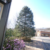 The large evergreen in Sandy Hook Center sits on The Glen, a corner property owned by the Newtown Forest Association (NFA). As town plans progress to redo the sidewalk, curbing and intersection, the NFA is also preparing to revitalize The Glen, which will likely include the tall tree's removal.   (Bobowick photo)