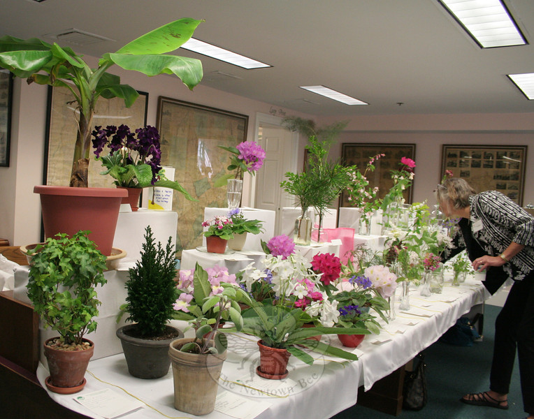 "The Garden Club of Newtown presented a special four-day standard flower show at C.H. Booth Library, May 18-21. Deb Osborne, above, making final adjustments to the display of horticulture entries Friday morning, served as the show's chair.   (Hicks photo)<br /> <br /> PLEASE NOTE: The full collection of photos that made up the slideshow that accompanied this story online can be found in a separate gallery, here:<br />  <a href=""http://newtownbee.smugmug.com/Journalism/Special-Events/Garden-Club-of-Newtown-South/23295542_NCx486#!i=1879881239&k=FzbHfDW"">http://newtownbee.smugmug.com/Journalism/Special-Events/Garden-Club-of-Newtown-South/23295542_NCx486#!i=1879881239&k=FzbHfDW</a>"