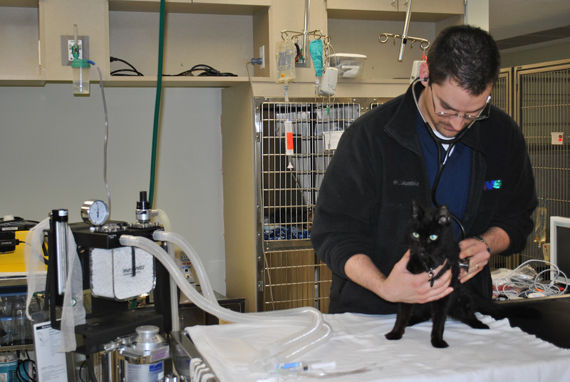Dr Benjamin Nappa examines a patient for irregular heartbeat in the emergency suite of NSV. A veterinarian is on site at all times for emergency situations.   (Crevier photo)