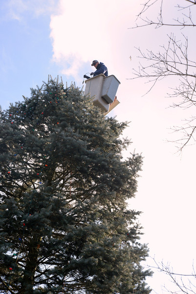 Jeff Thomas places strands of lights on the tall evergreen in Sandy Hook Center Wednesday in anticipation of this weekend's tree lighting celebration. (Bobowick photo)