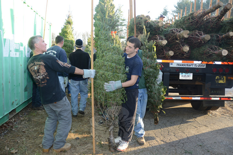 A barrage of volunteers moved more than 500 trees from the back of a truck to the Sandy Hook Volunteer Fire & Rescue Company lot on Riverside Road, stocking it on November 23 for the company's 12th annual tree sale. Company members will be selling trees and other items at the company's main station Monday through Friday from 6 to 9 pm (and by chance during the day), and from 9 am until 9 pm Saturday and Sunday, until Christmas Eve.  (Bobowick photo)