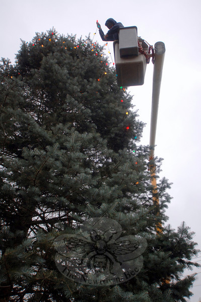 Keven Belden, in the cherry picker, was one of the Department of Public Works employees working to string up the lights on the Sandy Hook Center Christmas tree this week. The Sandy Hook tree lighting is scheduled for Saturday, December 4.  (Bobowick photo)