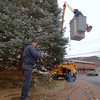 Working to prepare Sandy Hook Center's evergreen for the weekend's tree lighting, Jeff Thomas untangles a strand of colored bulbs while Keven Belden strings the lights through tree limbs this week. While town staff arranged the tree in Sandy Hook Center, Christmas Tree Committee members had readied the Ram Pasture tree in November for the weekend's lighting. —Bee Photo, Bobowick