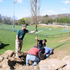 Parks and Recreation members Will Jacobs, left, and Kyle Leonardi grip the tree as volunteers Doug Nolan, left, and Greg Fico position the root ball in the hole.  (Bobowick photo)