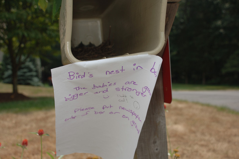 Kati Moses and her mother Anna recently kept an eye on young birds that hatched in their newspaper bin beside their mailbox, even going as far as posting daily notices to let passersby know how well the birds were doing… and to not disturb the hatchlings.  (Bobowick photo)