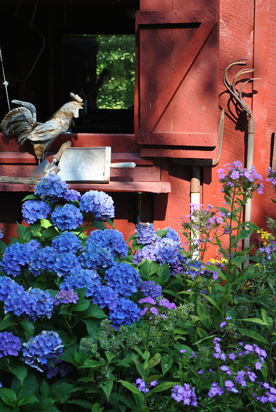 Farm tools, many once used by her grandfather, decorate the shed in Michelle Ferris's garden. A vibrant blue hydrangea and lavender phlox grow in the garden bordering the shed.  (Crevier photo)