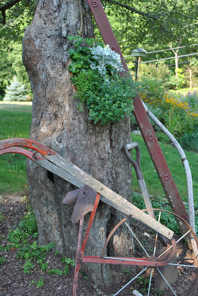 An old hand plow, a ladder, and a shovel lean against the last of the original Ferris Farm apple trees, now serving as a planter for an annual display.  (Crevier photo)