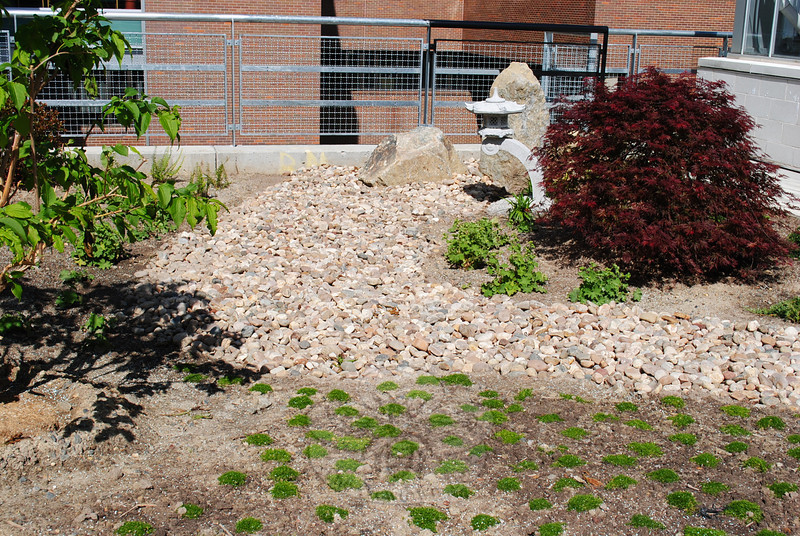 """The memorial garden installed at Naugatuck Valley Community College by Newtown resident Regina DelRossi includes several elements of the Japanese garden. A """"riverbed"""" of stone represents water; the granite lantern represents the age element; and three large boulders stand in for mountains. The bed of moss in the foreground also represents the age element, while the Japanese maple to the right in photo adds the color red to the landscape, a color traditionally used in the Japanese culture.  (Crevier photo)"""