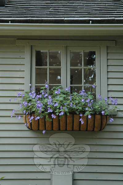 The blossoms sprouting from a  window planter provide pale purple color accents that contrast with the house's monochromatic earth-toned color scheme.  (Gorosko photo)