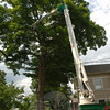 A cherry picker stretches its hydraulic arm into a maple along Main Street on Tuesday, June 29. From within its bucket where he is hidden by branches and leaves, Alan Potter selects the limbs to trim.   (Bobowick photo)
