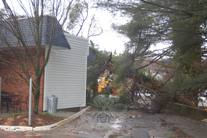 A large pine tree leans against Newtown Deli & Catering and Butcher's Best Market at 79 South Main Street on Monday, January 25, after Monday's rain and wind storm brought the tree crashing through the roof of the businesses at approximately 1 pm.  (Crevier photo)