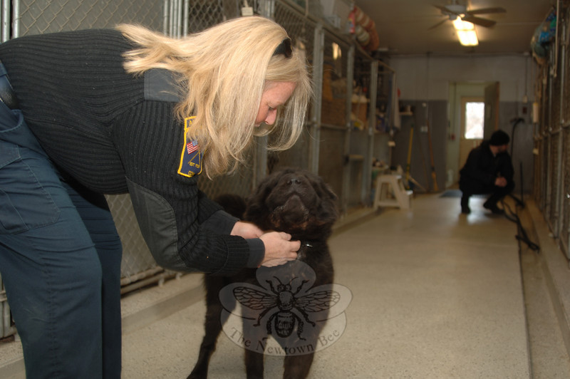 Welcomed by Animal Control Officer Carolee Mason, Delilah comes out of her kennel to walk the pound's main hall and step outside for exercise.  (Bobowick photo)