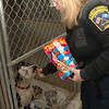Animal Control Officer Carolee Mason feeds treats to dogs living in the pound's kennels where they await adoption.  (Bobowick photo)