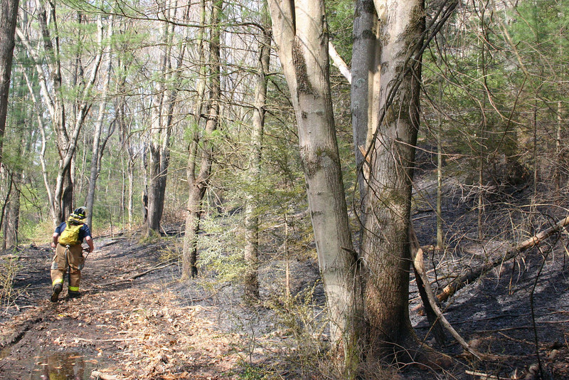 The brush fire in the woods between Miya Lane and Narragansett Trail on April 11 seemed to jump right over a trail in the woods, leaving the pathway unscorched.  (Hicks photo)