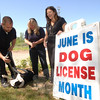 Thrashing on the ground in a playful mood, Theo, with Assistant Animal Control Officer Matt Schaub, stands with Animal Control Officer Carolee Mason, center, and Town Clerk Debbie Aurelia. They issue the reminder that June is dog license month. Ms Aurelia invites pet owners to join her outside the municipal center, at 3 Primrose Street, on Tuesdays in June between 10 am and 2 pm for renewals.  (Bobowick photo)