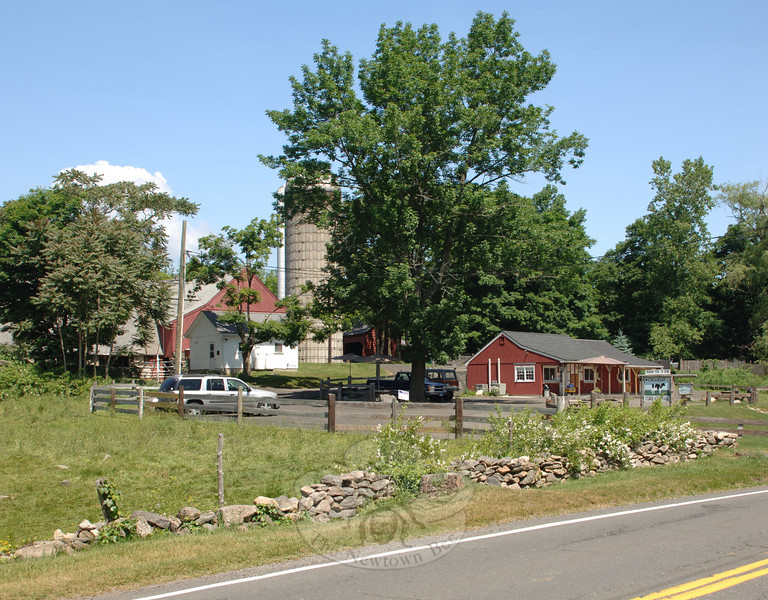 In past years the town has acquired easements for roughly 70 acres of the Ferris Farm along Sugar Street where Ferris Acres Creamery is open for ice cream, cows graze, and the land remains open to agriculture, hoof prints, and aromas of hay in the fields The public is invited to a ceremony to recognize this land, one of Newtown's preserved open spaces, on Friday, June 11, at 11 am, during the Ferris Farm Dedication, 144 Sugar Street.  (Bobowick photo)