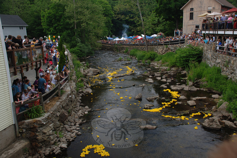 Residents crowded the railings, lots, decks and lawns bordering the Pootatuck River from the Sandy Hook Center bridge and into the distance May 29 as plastic, numbered ducks floated downstream toward a finish line during the Lions Club's 10th Annual Great Pootatuck Duck Race.  (Bobowick photo)