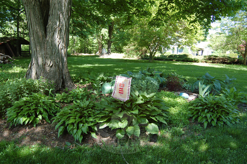 Beneath a swamp maple, Liz Arneth has created a shade garden sanctuary in memory of her good friend, Pam Reilly, who died 11 years ago. Her late nongardening friend, Ms Arneth says, would appreciate the struggle the plot of land has given her in finding plants that would thrive there  (Crevier photo)
