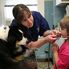 Mary Simpson helped Ellie Meyer put on a stethoscope while Travis, an Australian sheep dog, patiently waited to have his heart listened to.  (Hicks photo)