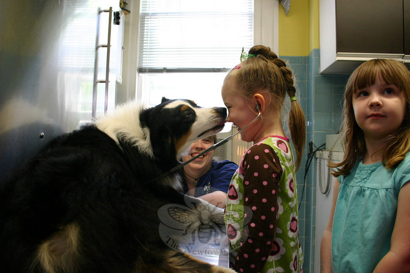 Whenever he could, Travis snuck in kisses on the students who were trying to listen to his heartbeat last week. Aleia Bischof was one recipient of a dog kiss.  (Hicks photo)